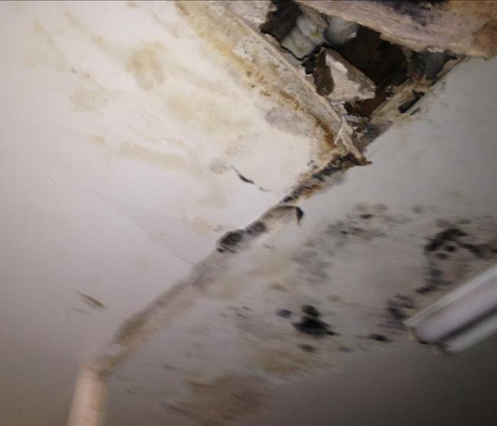 House Left Untreated After Water Damage